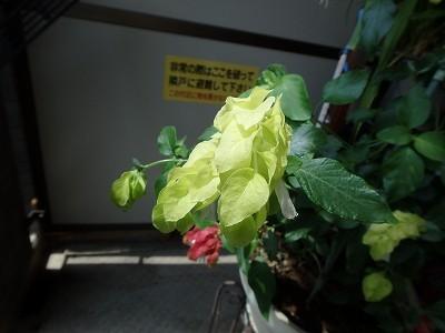 s-P8190016.jpg